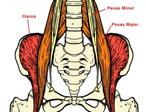 The Essential Role of the Psoas Muscle